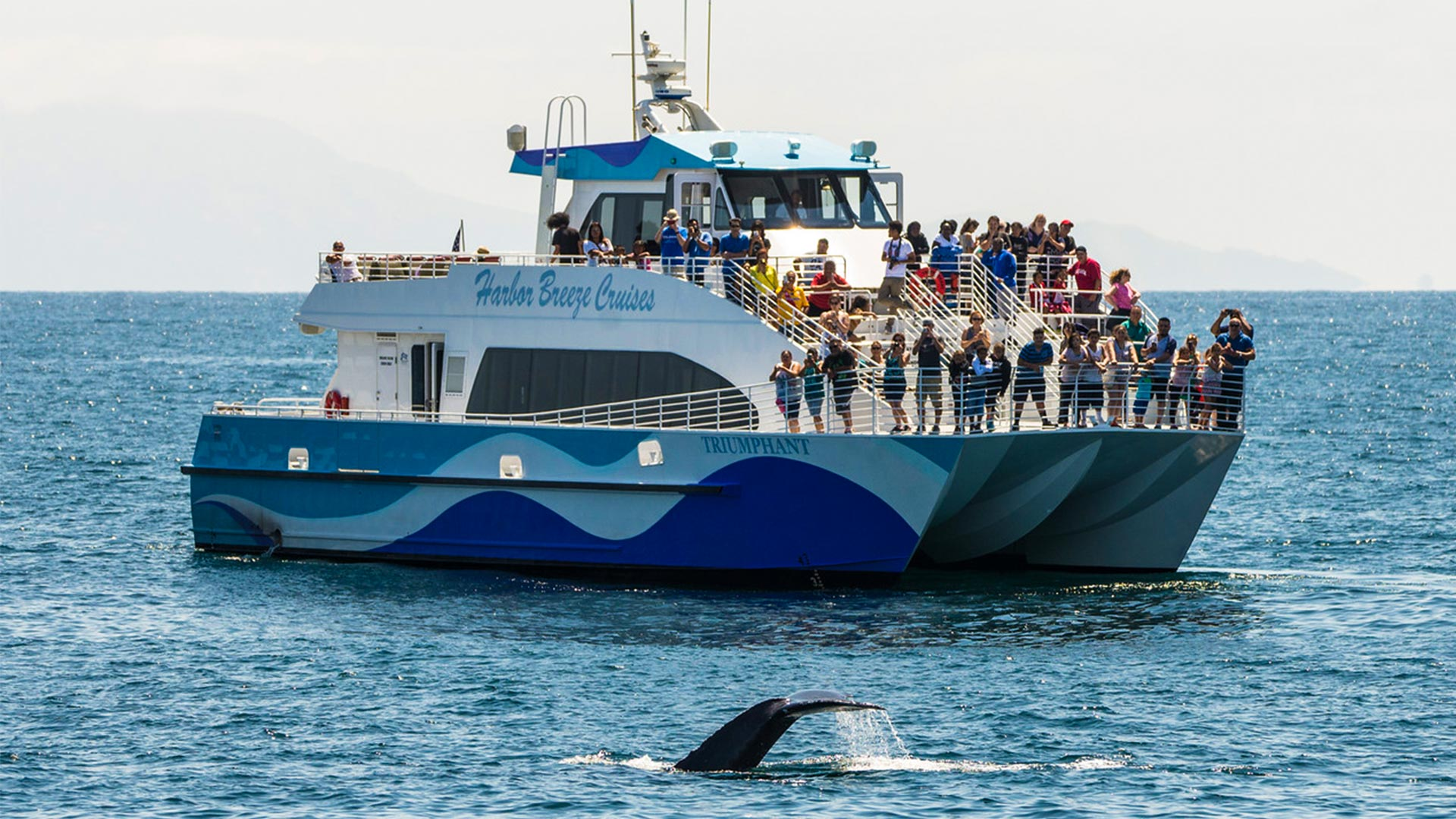 Whale Watching In The Greater Los Angeles Area Harbor Breeze
